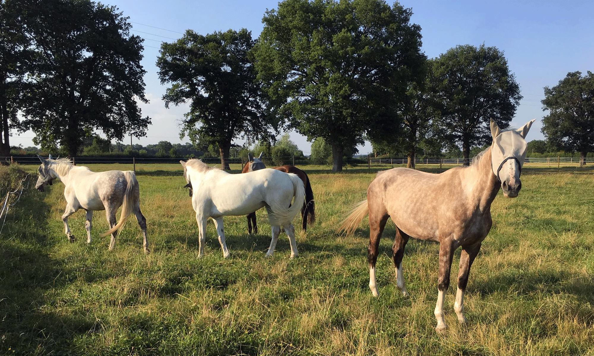 Centre équestre à Souvigny près de Moulins dans l'Allier
